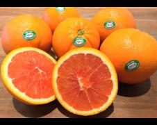 Oranges Cara Cara (Pack of 3)
